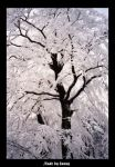 Snowy tree by grugster