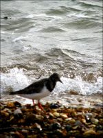 a wave and a bird by smev