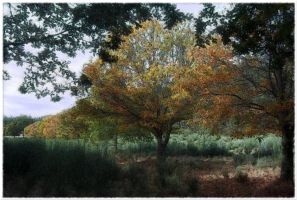 Autumn in the Field by nfp