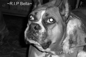 R.I.P Bella Donna by puppets-r-sexy