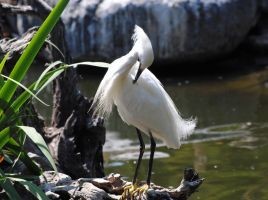 Egret pruning by fosspathei