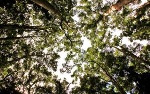 Canopy View by RakelClark