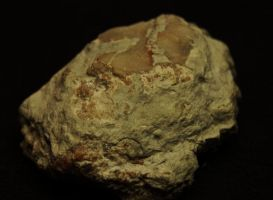 pic-a-day 080214 d --coprolite by pricecw-stock