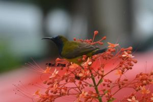 The New Beginning of D5200 , Olive Sunbird by GreenNexus51