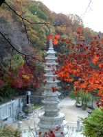 Korean Buddhist Temple in Fall by mathewpriest