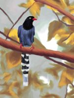 Taiwan Blue Magpie by elddiReMsihT