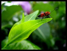 Where are you my Love Bug? by shuttermonkey