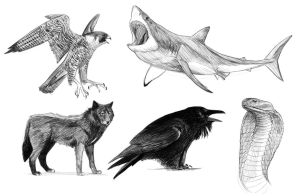 Favourite animal studies... by rpowell77