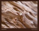 woody waves by georges-dahdouh