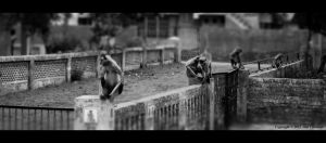 Gang's of Ahmedabad by JoelChristian