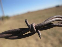 Barbed Wire by PuffTheMagicUnicorn