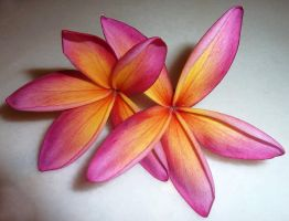 Plumeria XI by nordfold