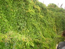 Wall of plants by WolfDemonG