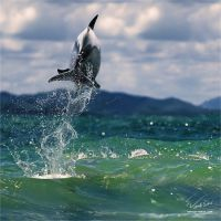 Dolphin Leaping Out of wave by Vitaly-Sokol