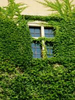 Wall of green by NeroFreak