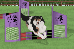 Grand Re-Opening Show - FFR's Fulmine Agility by AkaKennel