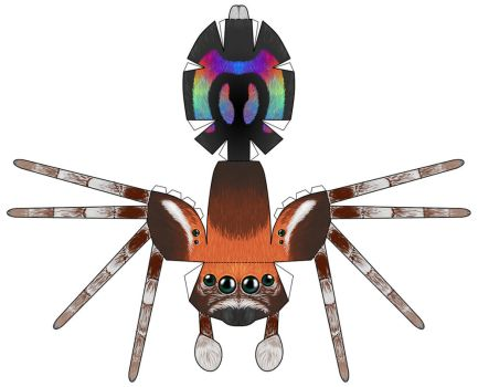 Rainbow Jumping Spider papercraft by RacieB
