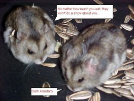 Hamsters of cuteness by sarahcoldheart