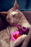 Valentines Day by chipset