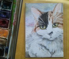 Aceo by Kaos-Nest
