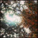 Wollaston Image, Leaves, 15th May, 2013, Phone Cam by youdontknowmebro