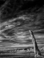 Stands Alone by eprowe