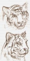 Tiger Sketchies by Chibi-chan88