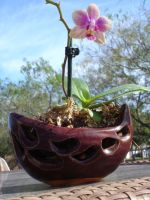 Orchid Pot by Stormphyre