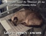 Memorial for Lasie by arconius