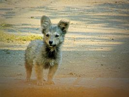 Lonely puppy by d7baly