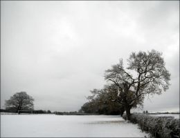 Wolds 04 by Cique