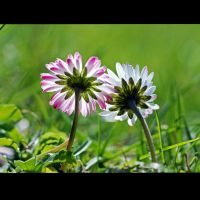 a new beginning by augenweide