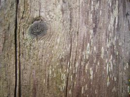 Wood Texture Two by gabbyred