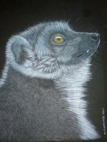 lemur for drawalong challenge by shirls-art
