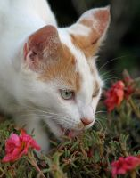 Cat licking water from flowers by westcoastwitch
