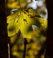 Light Green Leaf by Suinaliath