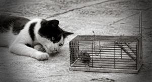 Cat and mouse by corsuse
