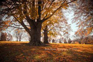 Fall in Worcester by butterphoto