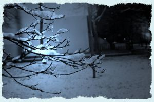 Snow branches - pho by nicodio
