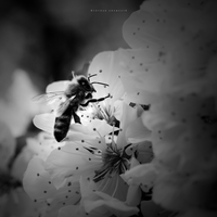 Worker Bee by DREAMCA7CHER