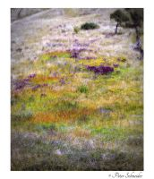 Carpet by Phototubby