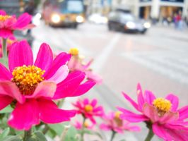 Flowers in the city by cmickle