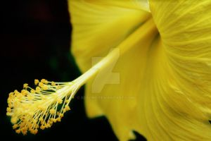 Tropical Yellow by Kesline