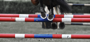 Horse Sports IV by Tirrathee