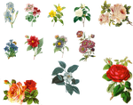 Vintage Flowers Set 1 PNG by chaseandlinda