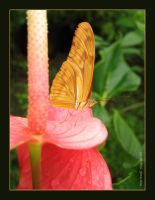 butterfly_02 by meritxell-photo