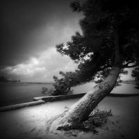 a tree and snow by Kaarmen