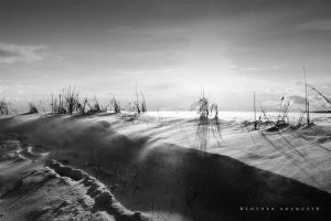 Snowdrifts by DREAMCA7CHER