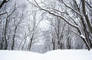 stock: winter forest 2 credit and show the result by amka-stock