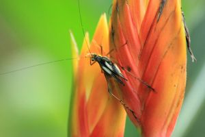 my first macro of an insect by guru1993